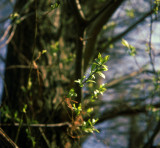 Other spring leaves