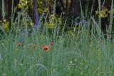 Jacksonville Arboretum 3 Field of Flowers