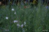 Jacksonville Arboretum 4 Field of Flowers