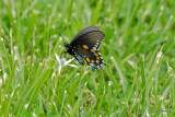 Butterfly on Flower at Cades Cove