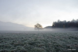 Early Morning Frost 2