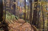 Rich Mountain Trail 5