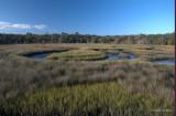 Salt Marsh at Timucuan Preserve