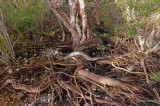 Willie Browne Trail - Twisted Tree Roots