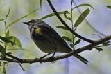 Birds in situ