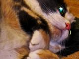 wanda + catnip