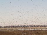 Tunica Gulls -  12-10-2011 -