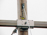 Western Kingbird - 6-6-04  First nest  for Mississippi