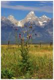 Mormon Row, Grand Teton National Park (HDR)