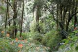 Forest on Mount Apo