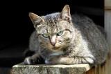 House cat
