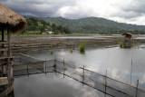Tilapia farms