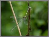 Willow emerald.jpg
