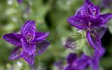Anchorage_Flowers_02Sep2011_ 006A [640x480].JPG