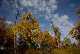 Kincaid_Fall_30Sep2011_ 037A [640x480].JPG