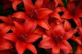 WileyPost_Flowers_02Aug2011_ 003 [640x480].JPG