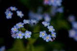 WileyPost_Flowers_05Jun2011_ 006Ab [640x480].JPG