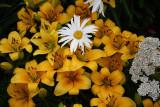 WileyPost_Flowers_25Jun2011_ 005 [640x480].JPG