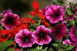 WileyPost_Flowers_30Jul2011_ 019 [640x480].JPG