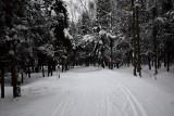 Anchorage Winter Scenes