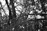 RR2-Landscape-Mantua 078 AC.jpg