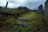 Grassy StepsDSC_6834V2pb.jpg