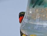 Hummingbirds for 2012 - Part 1