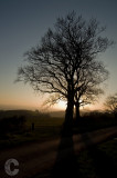 Tree and Low sun
