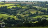 Fields near Butterleigh