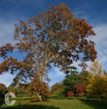 Autumn at Knightshayes