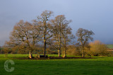 Tree and cattle feeder