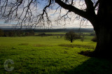 Farmland near Killerton