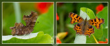 Comma - inside and out!
