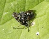 Bees D11 #0716