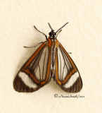 Moth D11 #1014