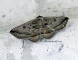 Moth D11 #2204