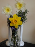 Daffodils for a lovely spring day, Rosemary fo rememberance