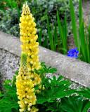Summer eventually came to the small garden