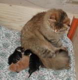 Miisa-emo vahtii vastasyntyneitä.