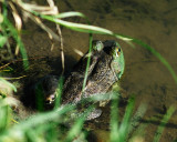 Snakes-Frogs-Toads-Turtles