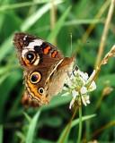 Butterflies-Moths