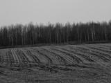 Furrowed Field in Winter Slumber