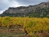 Vinyes a la Serra de Montsant