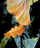 hawaii_foster_garden