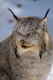 267 Lynx 4.jpg