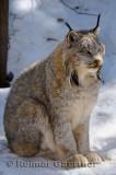 267 Lynx 6.jpg