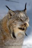 267 Lynx 7.jpg