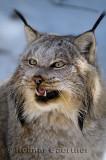267 Lynx 8.jpg