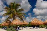 276 Palm trees 1.jpg
