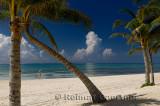 276 Palm trees 3.jpg